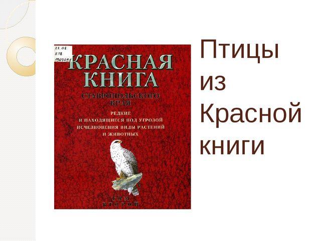 Птицы из Красной книги