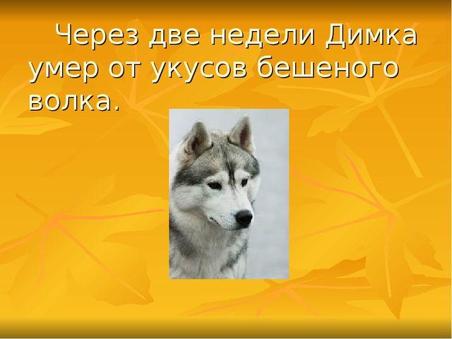 Через две недели Димка умер от укусов бешеного волка.