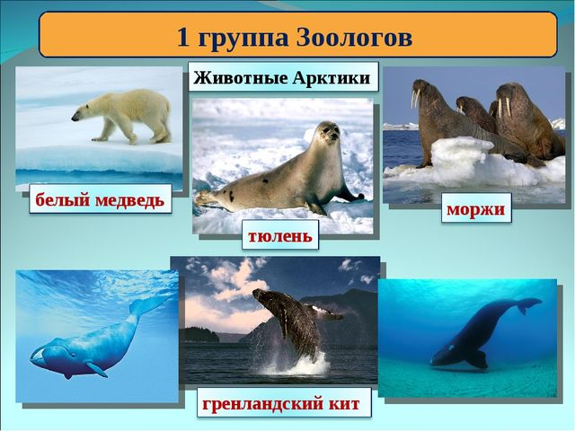 1 группа Зоологов