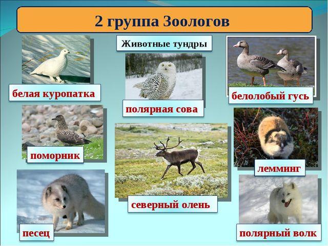 2 группа Зоологов