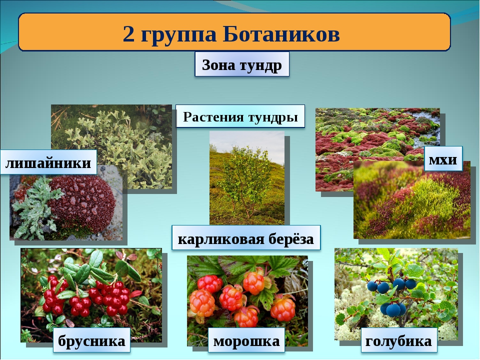 2 группа Ботаников