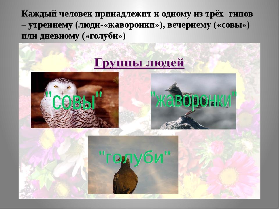 Каждый человек принадлежит к одному из трёх типов – утреннему (люди-«жаворонк...