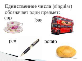 Единственное число(singular) обозначает один предмет: cup bus pen potato