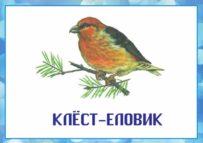 Классный час зимующие птицы