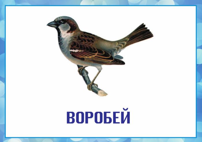 hello_html_5567809b.png