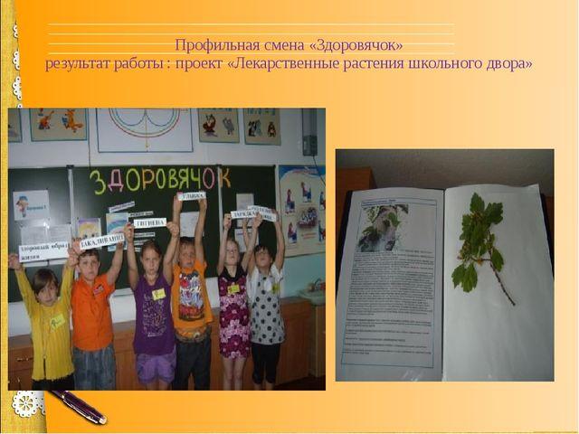 Профильная смена «Здоровячок» результат работы : проект «Лекарственные растен...