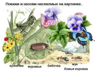 Покажи и назови насекомых на картинке. кузнечик бабочка жук муравьи божья кор