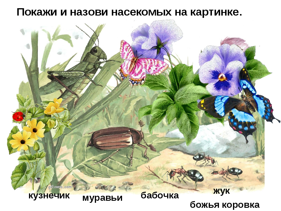 Покажи и назови насекомых на картинке. кузнечик бабочка жук муравьи божья кор...