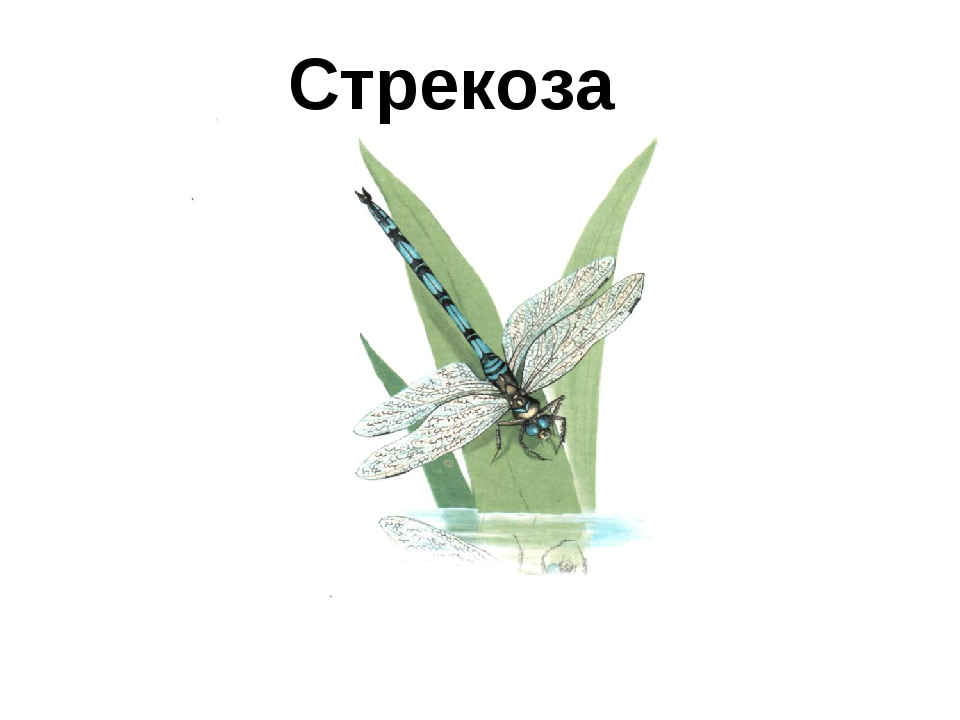 Стрекоза