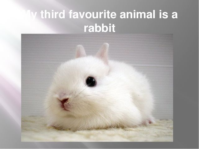 My third favourite animal is a rabbit