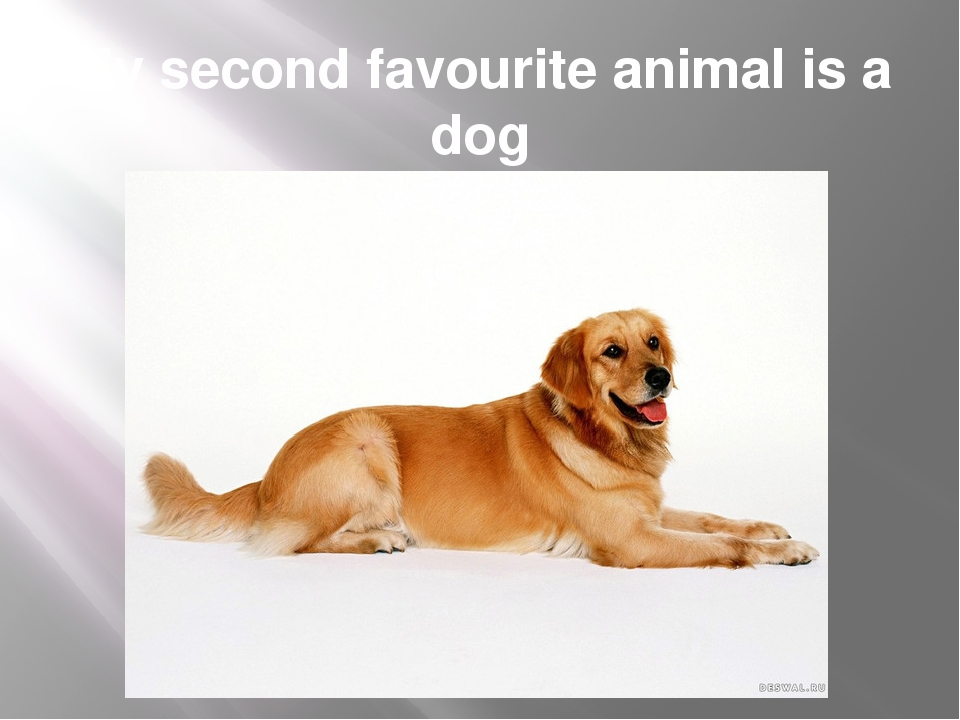 My second favourite animal is a dog