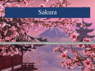 Sakura Cherry blossom or sakura are cherry trees. The fruit comes from a diff