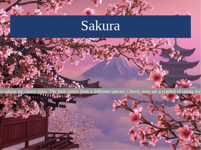 Sakura Cherry blossom or sakura are cherry trees. The fruit comes from a diff...