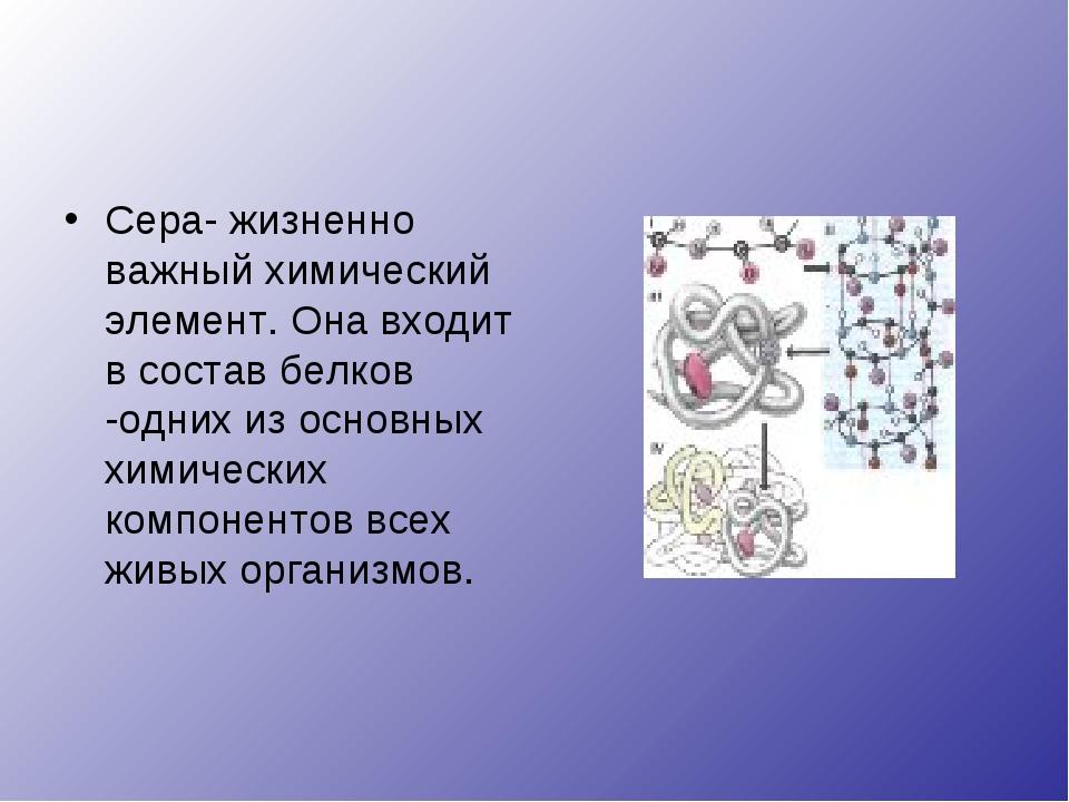Сера- жизненно важный химический элемент. Она входит в состав белков -одних и...