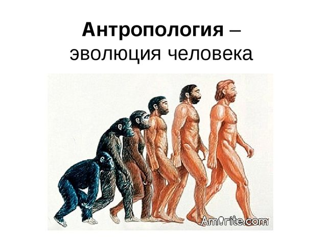 Антропология – эволюция человека