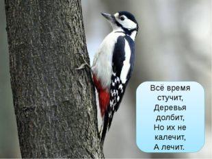 Всё время стучит, Деревья долбит, Но их не калечит, А лечит.