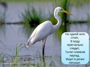На одной ноге стоит, В воду пристально глядит, Тычет клювом наугад, Ищет в р