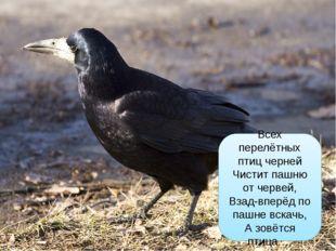 Всех перелётных птиц черней Чистит пашню от червей, Взад-вперёд по пашне вск