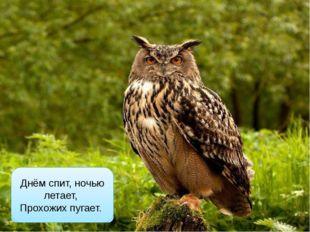 филин Днём спит, ночью летает, Прохожих пугает.