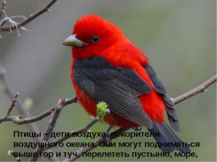 Птицы – дети воздуха, покорители воздушного океана. Они могут подниматься вы