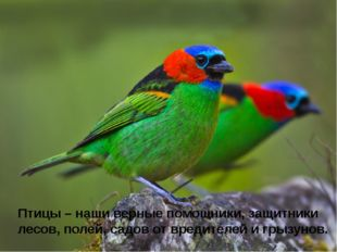 Птицы – наши верные помощники, защитники лесов, полей, садов от вредителей и