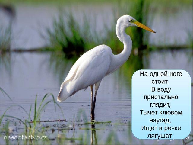 На одной ноге стоит, В воду пристально глядит, Тычет клювом наугад, Ищет в р...