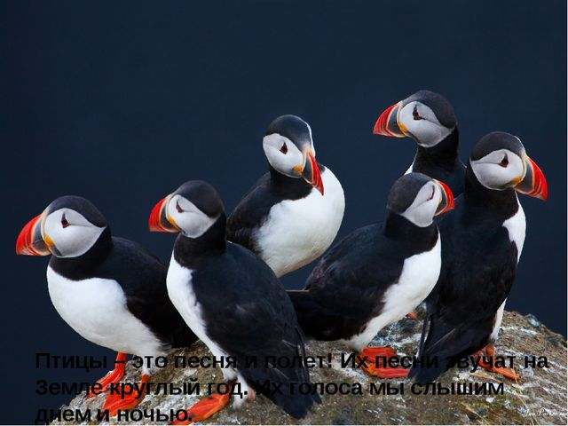 Птицы – это песня и полет! Их песни звучат на Земле круглый год. Их голоса м...