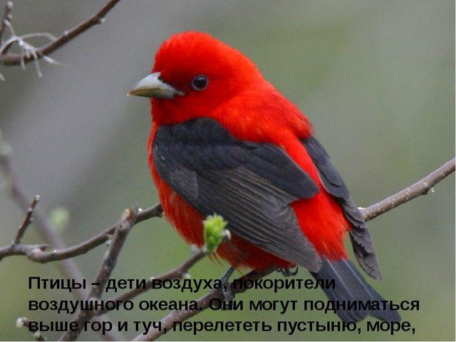 Птицы – дети воздуха, покорители воздушного океана. Они могут подниматься вы...