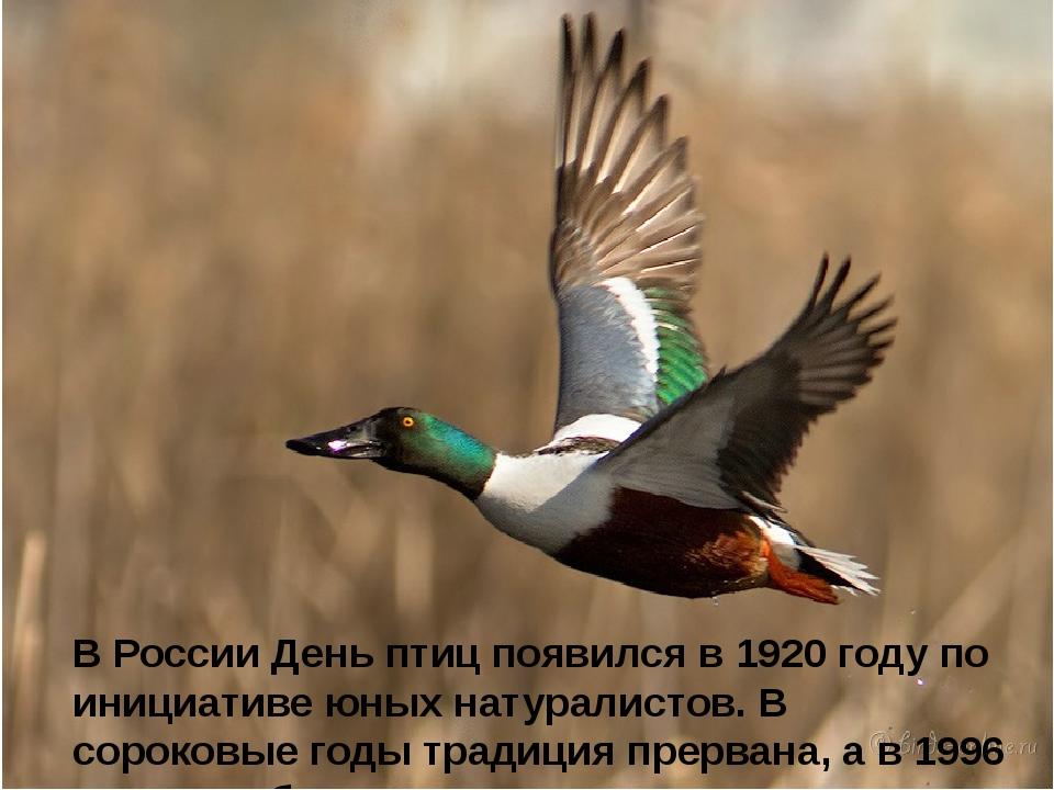 В России День птиц появился в 1920 году по инициативе юных натуралистов. В с...
