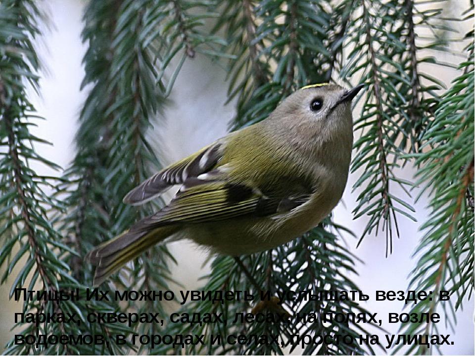 Птицы! Их можно увидеть и услышать везде: в парках, скверах, садах, лесах, н...