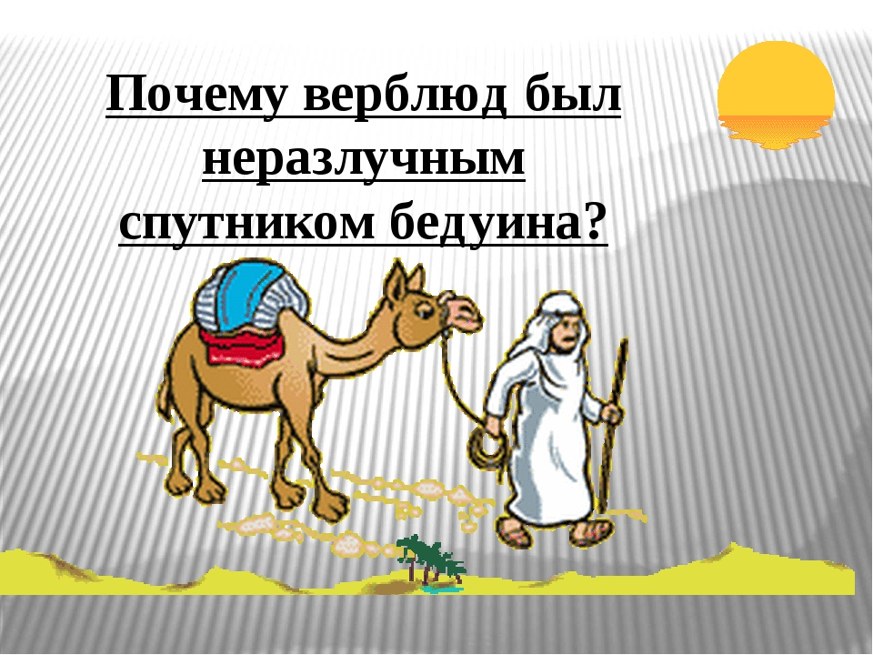 Почему верблюд был неразлучным спутником бедуина?