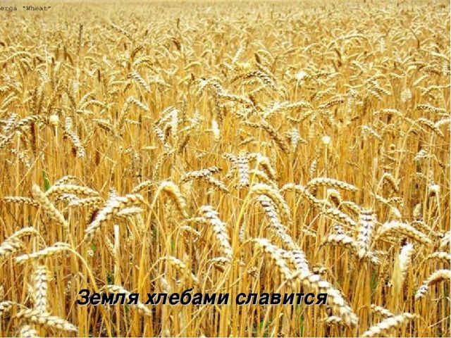 Земля хлебами славится