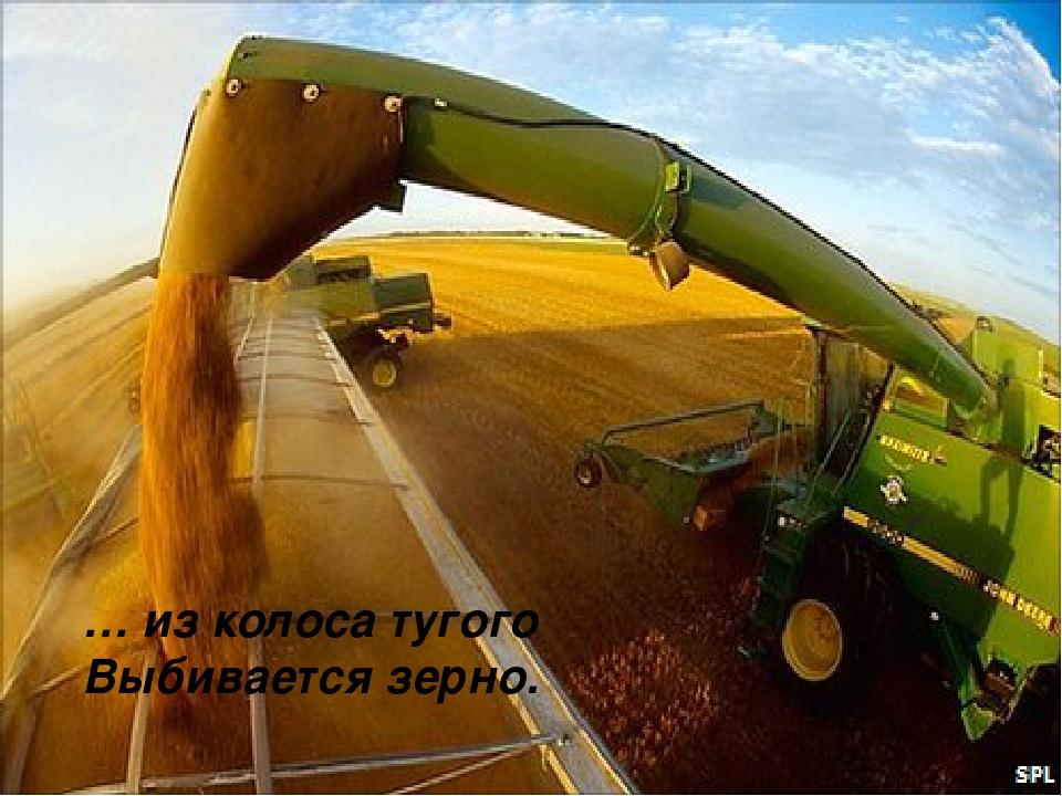 … из колоса тугого Выбивается зерно.