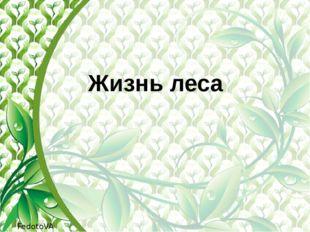 Жизнь леса FedotoVA