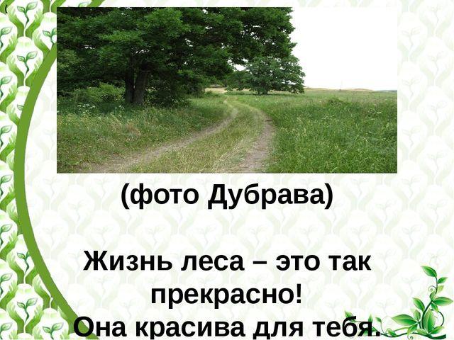 (фото Дубрава)  Жизнь леса – это так прекрасно! Она красива для тебя. Ты пос...