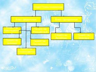 Отдел Покрытосеменные Класс Двудольные Класс Однодольные Семейство Сложноцве