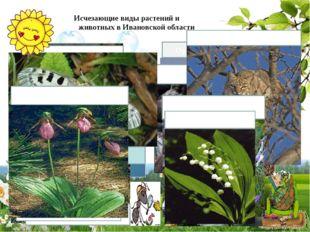Исчезающие виды растений и животных в Ивановской области Скопа Орёл - беркут