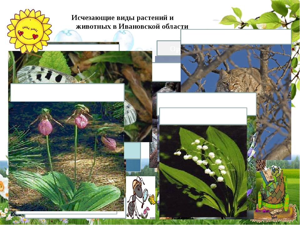 Исчезающие виды растений и животных в Ивановской области Скопа Орёл - беркут...