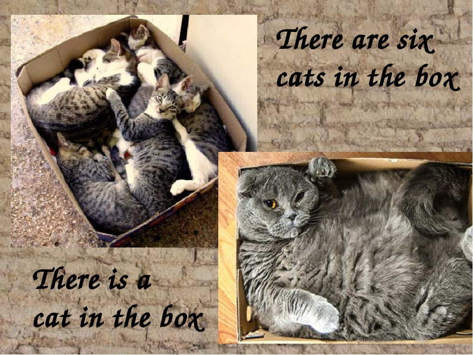 There are six cats in the box There is a cat in the box