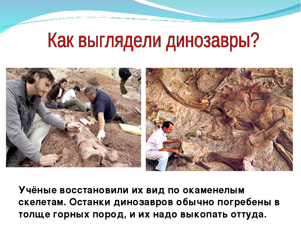 Учёные восстановили их вид по окаменелым скелетам. Останки динозавров обычно...