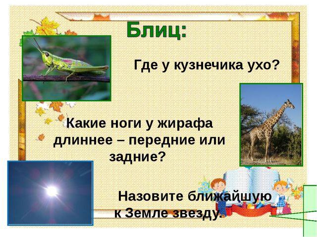 Где у кузнечика ухо? Какие ноги у жирафа длиннее – передние или задние? Назо...