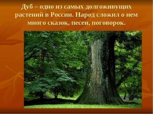 Дуб – одно из самых долгоживущих растений в России. Народ сложил о нем много