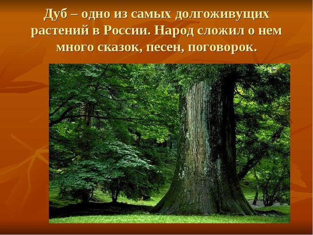 Дуб – одно из самых долгоживущих растений в России. Народ сложил о нем много...