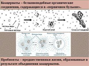 Коацерваты – белковоподобные органические соединения, содержащиеся в «первичн