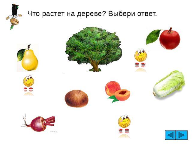 Что растет на дереве? Выбери ответ.