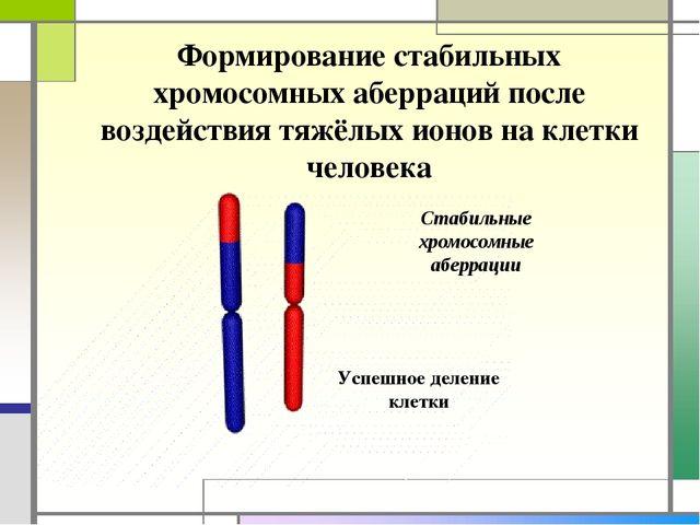 Стабильные хромосомные аберрации Формирование стабильных хромосомных аберраци...