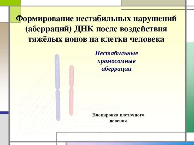 Формирование нестабильных нарушений (аберраций) ДНК после воздействия тяжёлых...