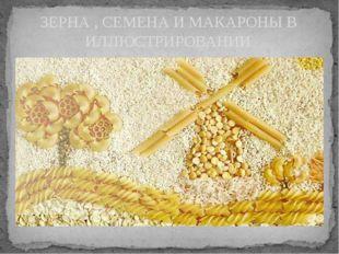 ЗЕРНА , СЕМЕНА И МАКАРОНЫ В ИЛЛЮСТРИРОВАНИИ