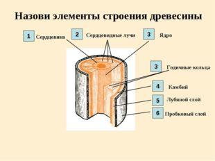 Назови элементы строения древесины Сердцевина Сердцевидные лучи Ядро Годичные