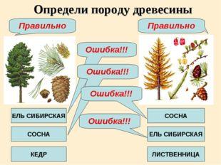 Определи породу древесины ЕЛЬ СИБИРСКАЯ КЕДР СОСНА СОСНА ЕЛЬ СИБИРСКАЯ ЛИСТВЕ